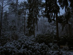 fairy tale morning (numuseum) Tags: morning trees snow garden veluwe numuseum