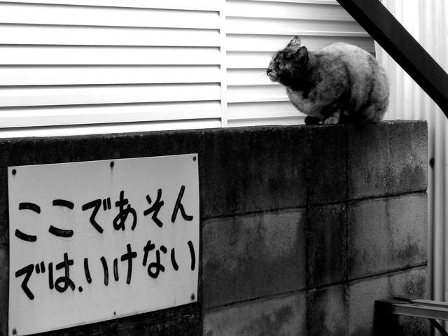 Today's Cat@2010-12-18