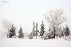 Winter Wizardry (Loreen May Photography) Tags: trees winter white snow canada cold frost alberta cans2s scenicsnotjustlandscapes