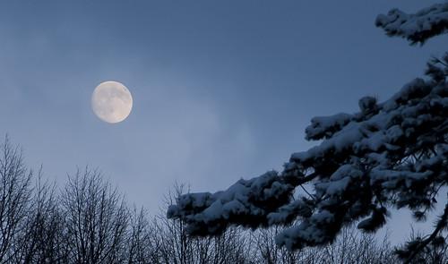 [フリー画像] 自然・風景, 月, 樹木, 雪, スウェーデン, 201012241700