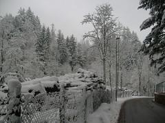 neve velate-3 rid.800 (mariosumi) Tags: neve inverno varese velate
