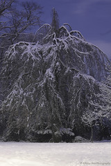 Snow on branches (ABrio) Tags: park trees ireland dublin moon white snow long exposure blu branches magic blackrock avoca trre
