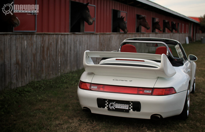 Porsches and Horses, fitting combo no?