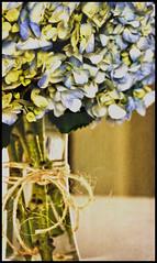 Hydrangea 2 (shreya59) Tags: flowers blue texture beauty nikon hydrangea d7000