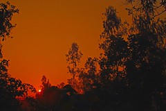 Sun Rise at Heritage [   -2 ] (HamimCHOWDHURY  [Active 01 Feb 2016 ]) Tags: life light shadow red portrait blackandwhite sun white black green nature sunrise canon eos twilight colorful faces blu sony surreal excellent eucalyptus dhaka vaio rgb hobigonj bangladesh dlsr 60d rubbergarden rubbercultivation 595036 framebangladesh rubberplan digombor dawanbari marufdeawan saguntig