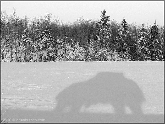 P1130389_car_shadow