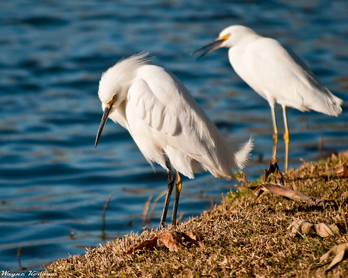 273/365 - Birds at Santee Lakes