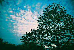 Desert Breeze Park, Chandler, Arizona (kevin dooley) Tags: light cloud tree film analog 35mm lens lomo xpro lomography xprocess slim cross wide plastic process cheap viv vivitar processed ultra extra explode uws 22mm vivitarultrawideslim ultrawideandslim vivitarultrawideandslim cloudshot vuws vivalaviv cloudware