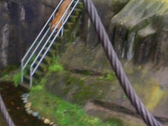 Nude descending a staircase -- an unclothed Sumatran tiger, anyway. #sfzoo - by wajiii