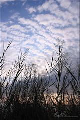Relax ! (Abeer Hussein) Tags: canon relax landscape eos 1855 صورة الغروب غيوم بحر وقت عدسة طبيعه 450d كانون العزيزيه ترايبود كاميرة لاندسكيب ستاند