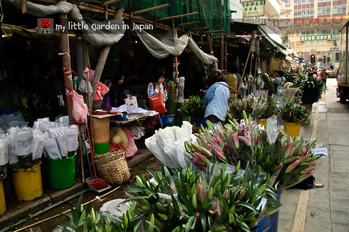 Hong-kong-flower-market-6