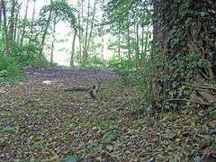 506 (benbobjr) Tags: uk england birmingham unitedkingdom naturereserve lordoftherings shire westmidlands tolkien birminghamuk midlands moseleybog theshire moseleybognaturereserve