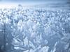 ... winter wonderland ... (SebusPhotography) Tags: blue schnee snow cold detail macro ice nature germany landscape bayern deutschland crystal natur frosty structure kalt eis landschaft nahaufnahme winterwonderland schafberg kristall snowcrystal eisig bayrischerwald schneeflocke eislandschaft stuktur platinumheartaward sebusphotography gefrieren wwwsebusphotographycom schnekristall gefrierent