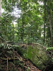 IMG_0137 (Ad perture) Tags: trees winter green southamerica canon rainforest guyana jungle tropical vegetation caribbean tropics 2010 conservationarea