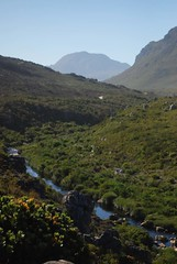 River (.donelle) Tags: plants mountain southafrica naturereserve kleinmond inthemountain kogelbergbiosphere