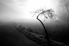 Atomic Nuclear Desolation (Mario Vani) Tags: mygearandme ringexcellence