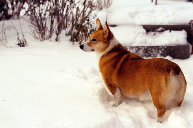 365/12 - Snow Day