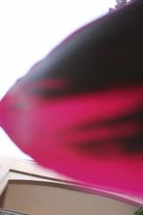 Ti Plant Cordyline Fruticosa fuschia pink leaves close up (RYANISLAND) Tags: flowers trees summer vacation plants plant flower tree green nature floral gardens fruit garden island photography islands photo bush pretty natural screensaver photos miami gardening nursery flor jungle tropical tropicalisland bloom florist tropicalplant agriculture floralarrangement naturalbeauty bushes horticulture tropics mothernature flowershop stockphoto blooming 305 tropicalplants flowergarden tropicalfruit stockphotography tropicaltree warmweather miamiflorida tropicalgarden gogreen horticulturist tropicaltrees 33132 tropicalclimate horticulturists jungleisland peakbloom jungleislandmiami jungleislandflorida areacode305 wwwjungleislandcom zipcode33132
