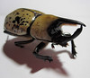 Giant Beetle 5 (Barb ☮) Tags: bug insect scary beetle spotted pinchers