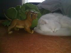 Hyoga XXXVI (ibarakaldo) Tags: k animal jon gato felino compaia barakaldo persa myway hyoga artetxe ibarakaldo