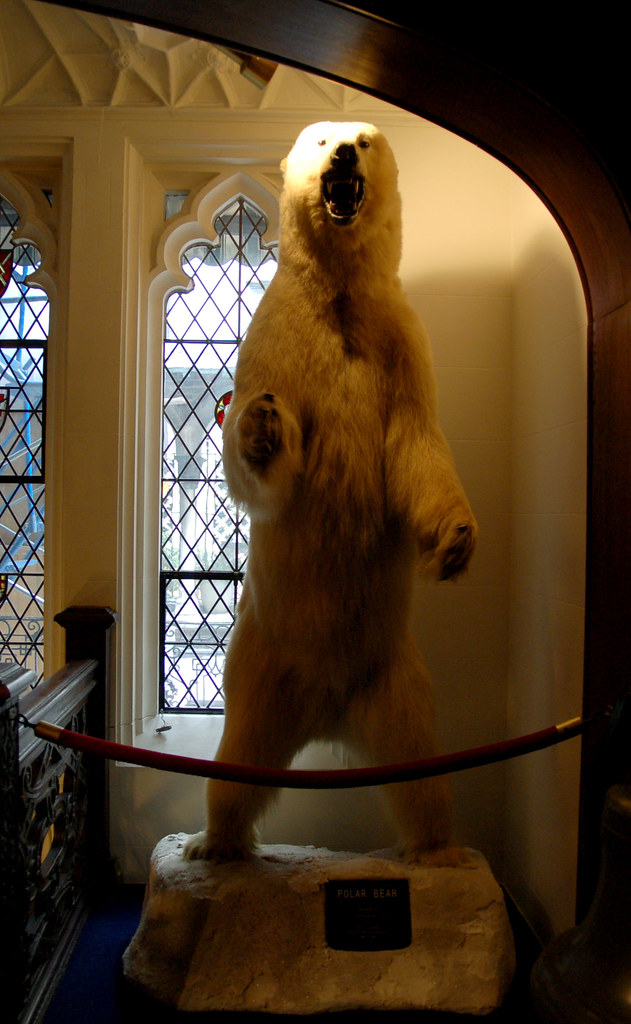 Polar Bear on the second floor landing