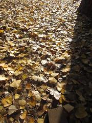 Fall_Talkoot_072