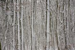 ckuchem-1646 (christine_kuchem) Tags: baumrinde buche bume eiche eis frost hainbuche natur pfad pflanzen ruhe samen spuren stille struktur wald weg wildpflanzen winter einsam kalt schnee ste