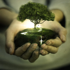 Life (Purn) Tags: life light inspiration tree nature photomanipulation photoshop sony young butterflies oxygen teen learning alpha purn truthandillusion