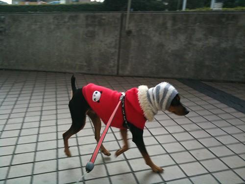やっとのことで散歩なう。軽快に走る黒犬がうらやましい。