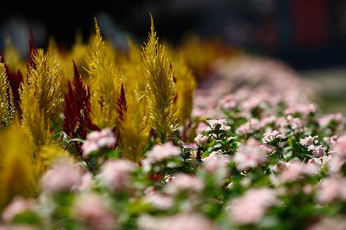IMAGE: http://farm6.static.flickr.com/5091/5404112002_fa2fecb8de.jpg