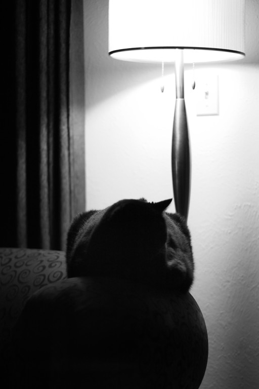 cat loaf in b/w for dramatic effect