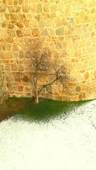 rbol de mi alma (kishira) Tags: nieve vida invierno esperanza calor vila