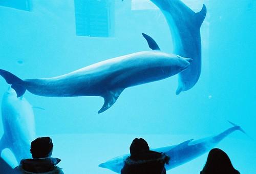 イルカとダンス