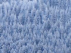 DSC00297 - accumulation verticale - HELP JAPAN PLEASE (Marie C. CUDRAZ) Tags: schnee winter snow france tree nature marie alberi forest alpes c sony hiver mc2 cybershot natura neige alpen savoie nebbia inverno wald alpi arbre moutain baum forêt sapin bois givre rhone tarentaise bonneval forst boschi cudraz rdekv ccudraz mc² hx5 hx5v dschx5 nevve dschxv