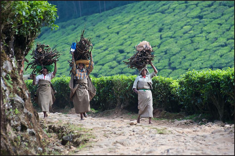 Тот самый индийский чай