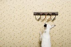 Choice (zhouxuan12345678) Tags: dog white animal puppy fun freedom funny humour collar choose collars chumor