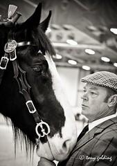 IMG_7134 (Tony Golding) Tags: horse shire breed rare peterborough equine springshow shirehorse canon400d shirehorsesociety tonygolding heavyhorsephotography shirehorsesocietyspringshowcollection forgetmenothere