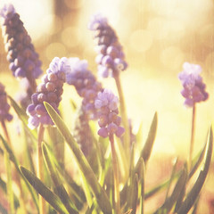 ~ vernally ~ (~ Pixel Passion ~) Tags: flowers blue summer flower color macro green texture nature colors closeup season spring colorful warm soft mood moody peace natural pastel softness dream peaceful harmony dreamy summertime atmospheric tender tenderness edit springtime harmonic atmophere