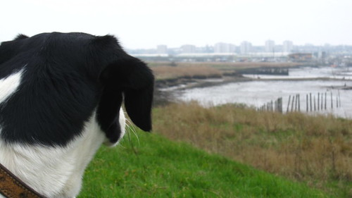 holly-look-london-cray-marshes