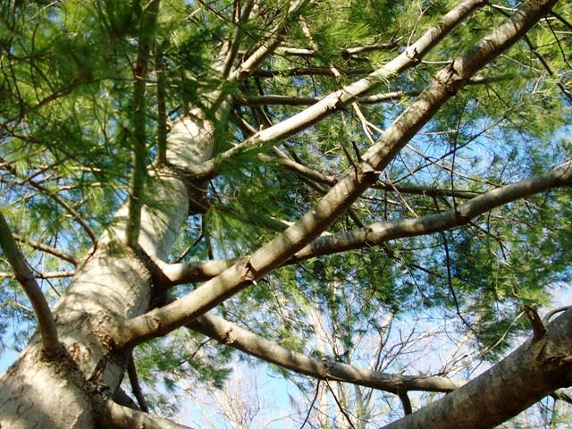 tree climbing 051