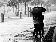 Lover's Rain (ahmadjaa) Tags: life street love rain umbrella walk streetphotography streetlife olympus malaysia kuala kualalumpur raincoat cinta kl klcc taman sayang lumpur e5 hujan zd klccpark blackwhitephotos olympuse5 zuikodigital1260mm ahmadjaa