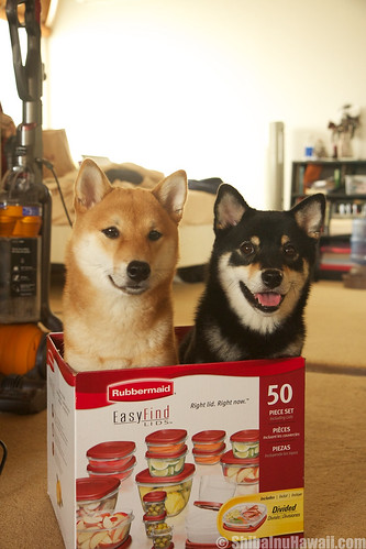 Shiba Inu Hawaii Humor: Rubbermaid makes Shibas?