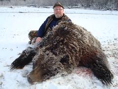 Yukon Grizzly Bear