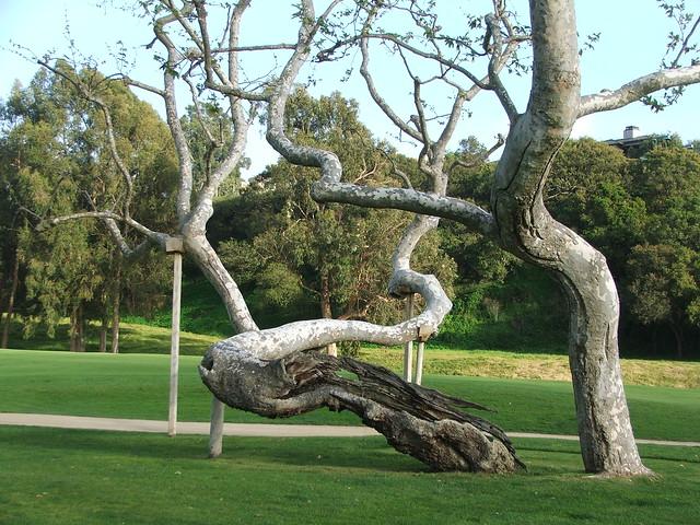 Tree near 16