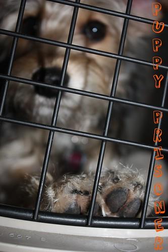 Puppy Prisoner