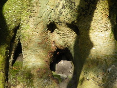 Surprised Tree (the woodland pixie) Tags: nature lewesdon