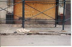 Goldblatt's Terrazo Entrance (WayOutWardell) Tags: chicago uptown goldblatts