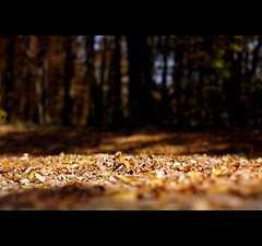 I am in a thousand winds that blow... (*karla) Tags: life wood autumn trees light nature leaves canon death sadness 50mm dof bokeh goodbye imissyou