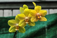 Orchidee (Michael Döring) Tags: orchidee bochum d300 botanischergarten ruhruniversität querenburg michaeldöring afs60microg