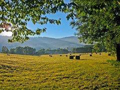 Anse Morning (maximfr) Tags: morning travel summer sun france leave nature landscape soleil countryside country t paysage campagne auvergne foin feuille matin puydedme anse canoneos50d livradoisforez saintclmentdevalorgues